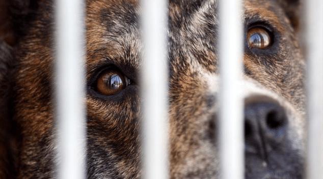 2019-03-18 13_23_11-PETA dénonce le financement d'expérimentations animales par l'AFM-Téléthon
