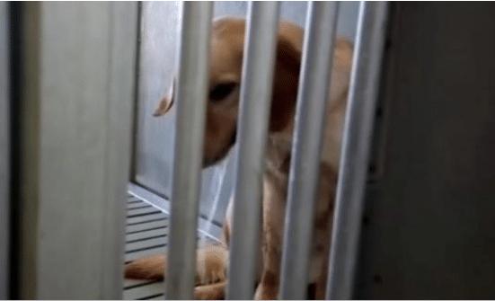 2019-03-18 15_07_26-EXCLU - La fondatrice de l'association Animal Testing dénonce l'utilisation d'an