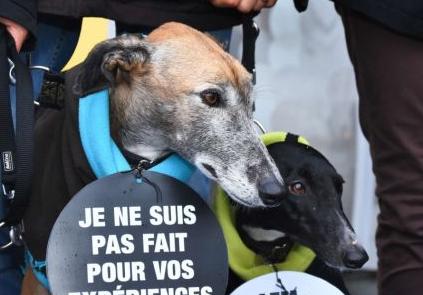 2019-03-18 15_31_37-Faut-il écouter les amis des animaux et boycotter le _Téléthon_ 2018 _
