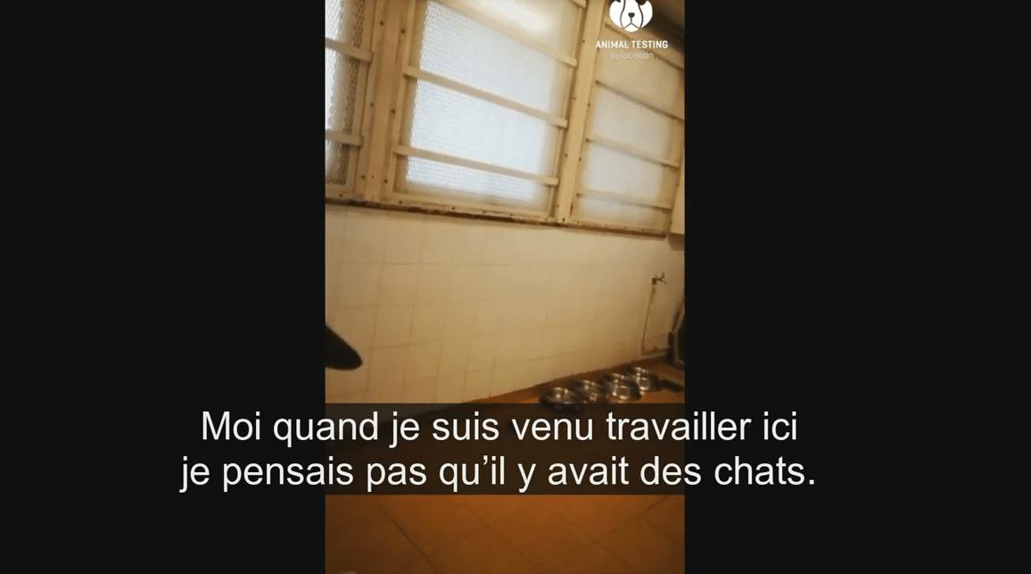 Des chats utilisés pour des expériences de laboratoire - YouTube