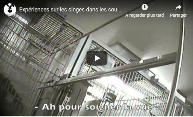 Une vidéo révèle l'expérimentation sur les primates
