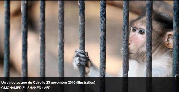 Des expérimentations menées sur des singes en plein Paris