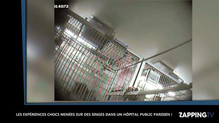 Des expériences sur des singes dans le sous-sol d'un hôpital parisien (vidéo) _