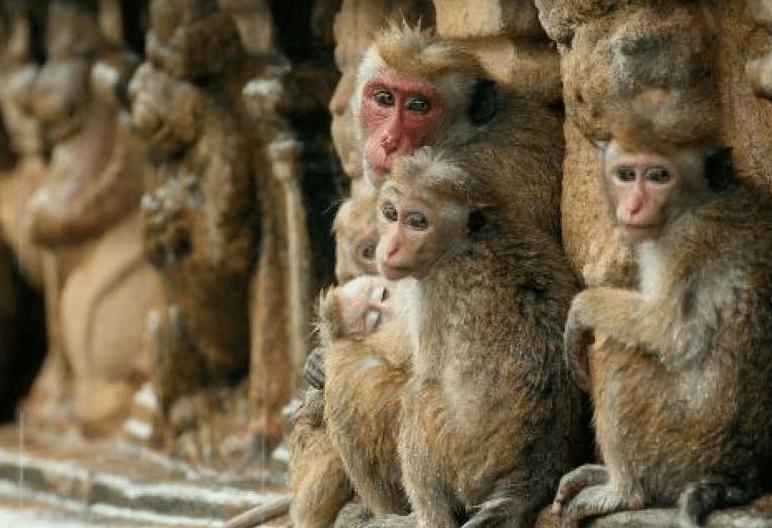 2019-04-29 19_17_08-VIDEO. Une association dénonce les tests d'un laboratoire parisien sur des singe
