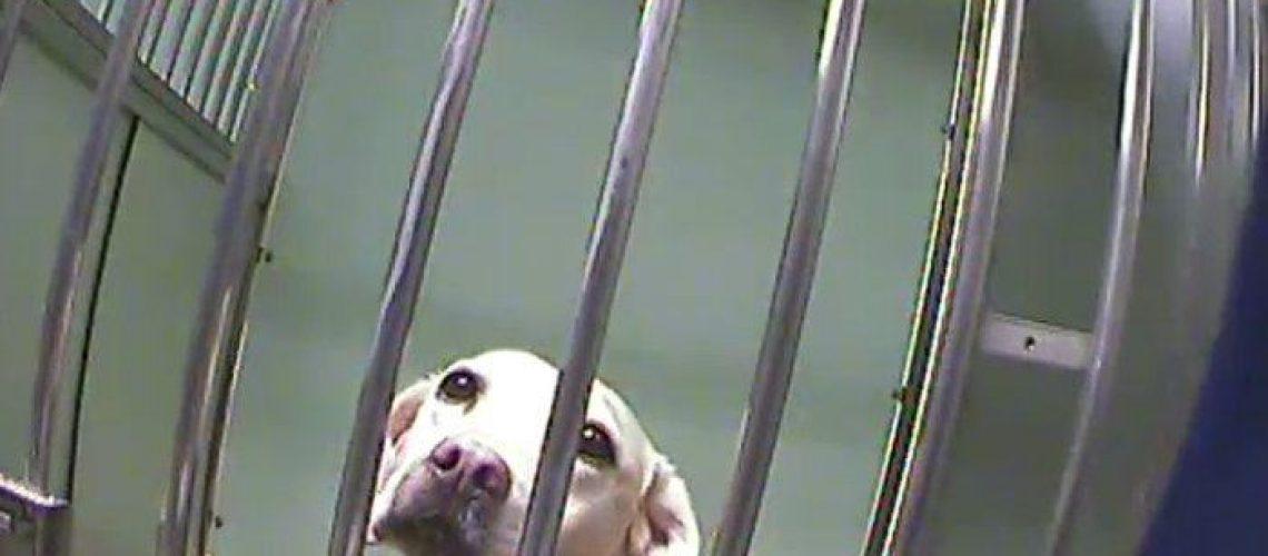 visuel-chien-téléthon-animal-testing